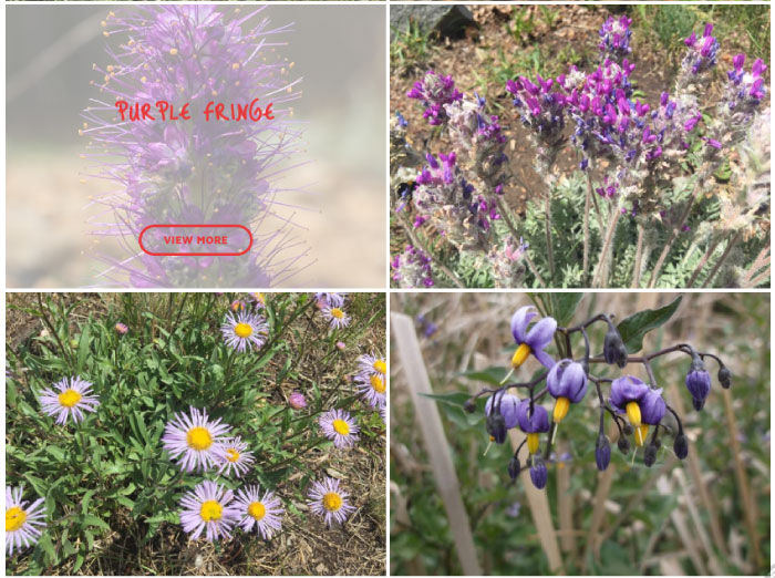 Photo Database of Colorado's Wildflowers